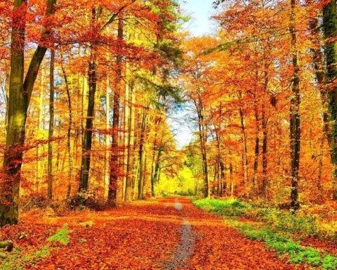 В Україну увірветься потепління: озвучено прогноз погоди до кінця тижня