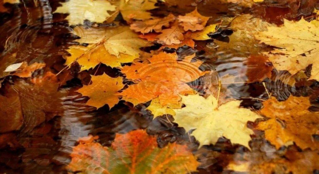 Дожди и похолодание: погода в Киевской области 8 ноября