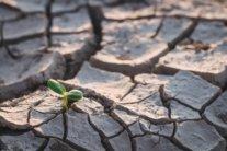 Україна перетворюється на Грецію за кліматом: що буде з врожаєм цього року
