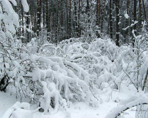 Зима вже тут: з'явилися вражаючі фото засніжених Карпат