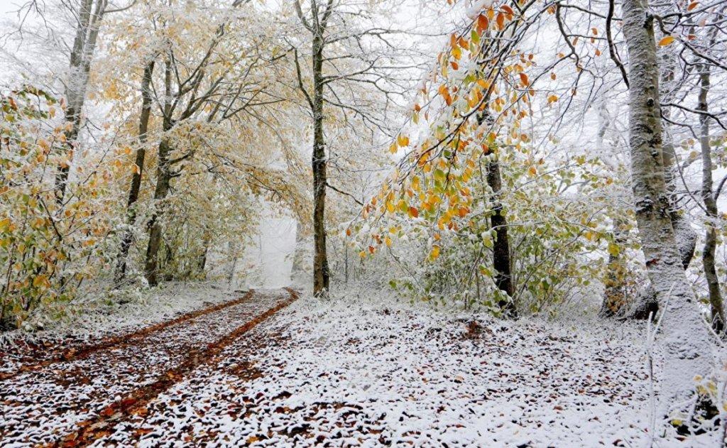 Постоянные дожди и холод: синоптик дал неутешительный прогноз погоды на ноябрь