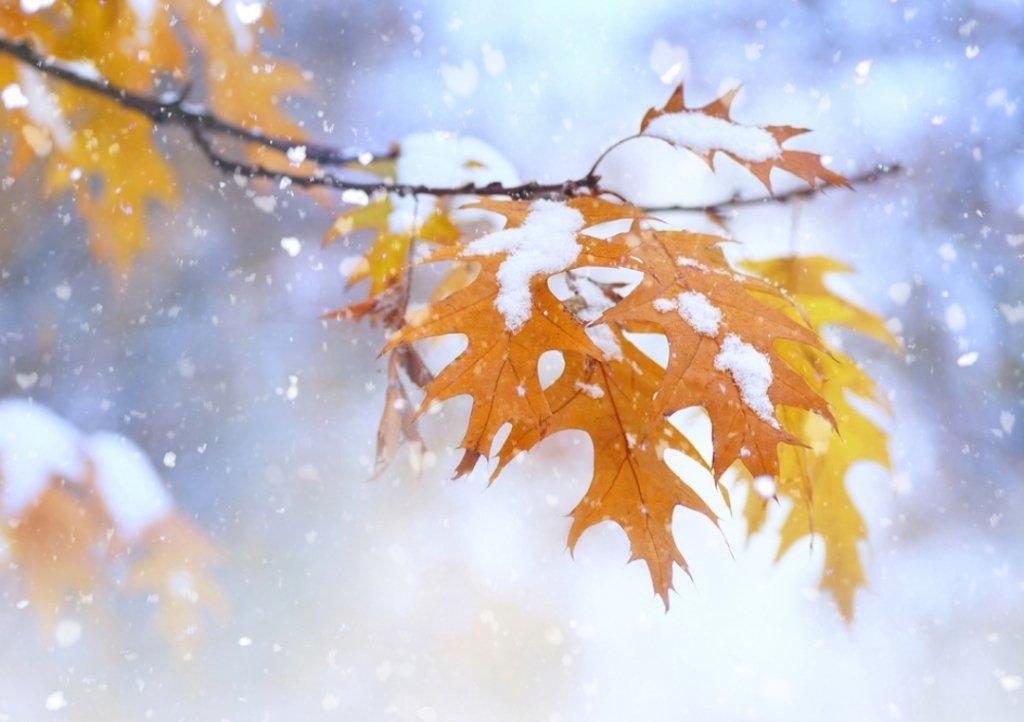 В Украине выпал первый снег: волшебные кадры