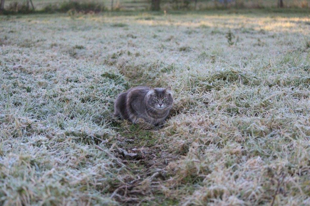 Ударят морозы: народный синоптик рассказал, когда придет зима