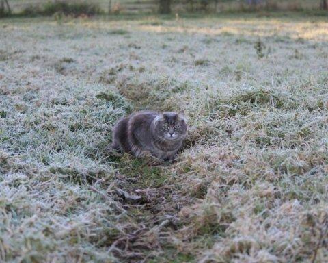 Сухо и морозно: синоптики дали прогноз погоды на субботу