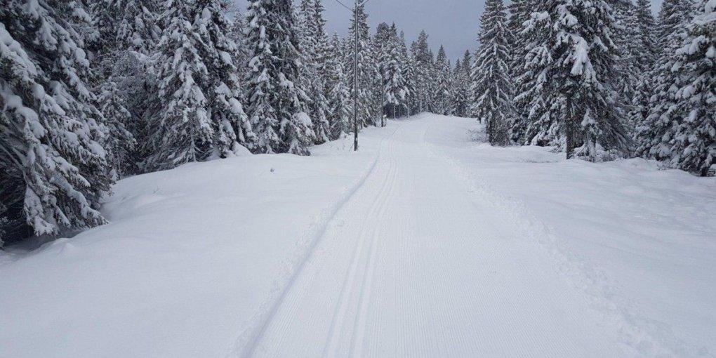Из-за снежного шторма в Карпатах просят воздержаться от походов в горы