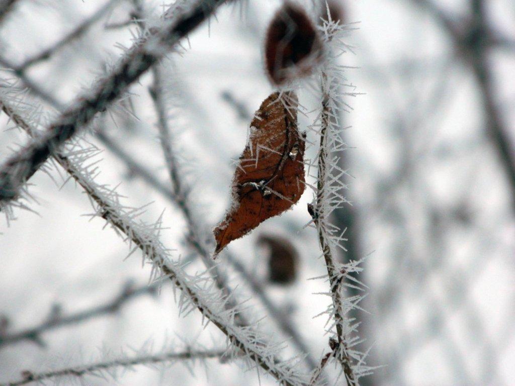 Сніг щодня і морози: синоптик дав прогноз на зиму-2021
