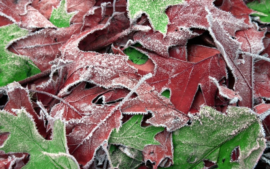 До -3° та паморозь: синоптик попередила про різке похолодання