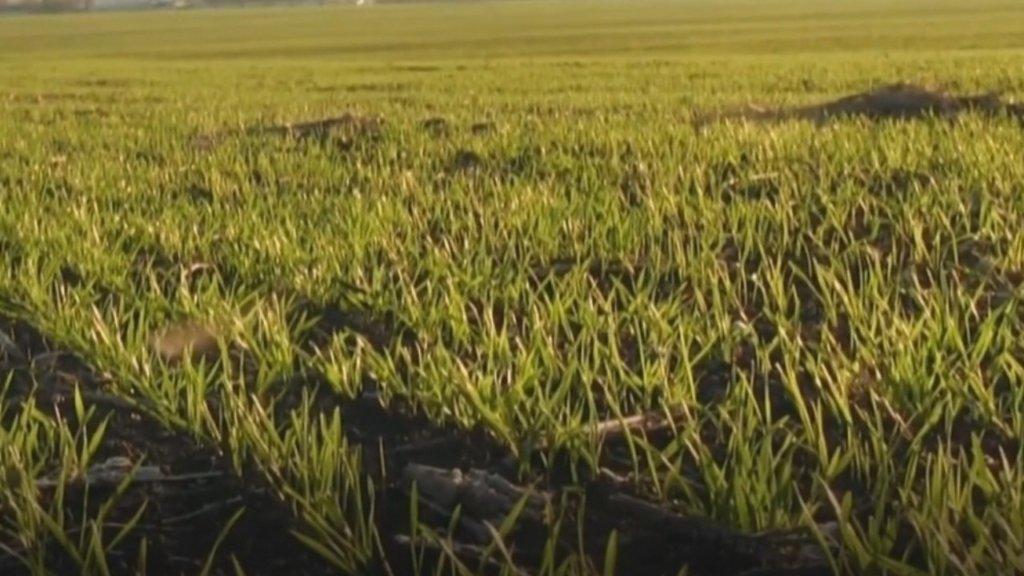 «Астарта-Киев» оказывает давление на малый агробизнес