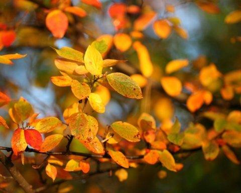Ноябрь уже успел отметиться температурным рекордом: подробности