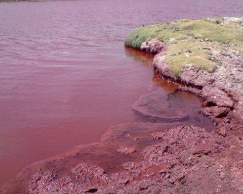 Море в Криму забарвилося в червоний колір: подробиці екологічної НП