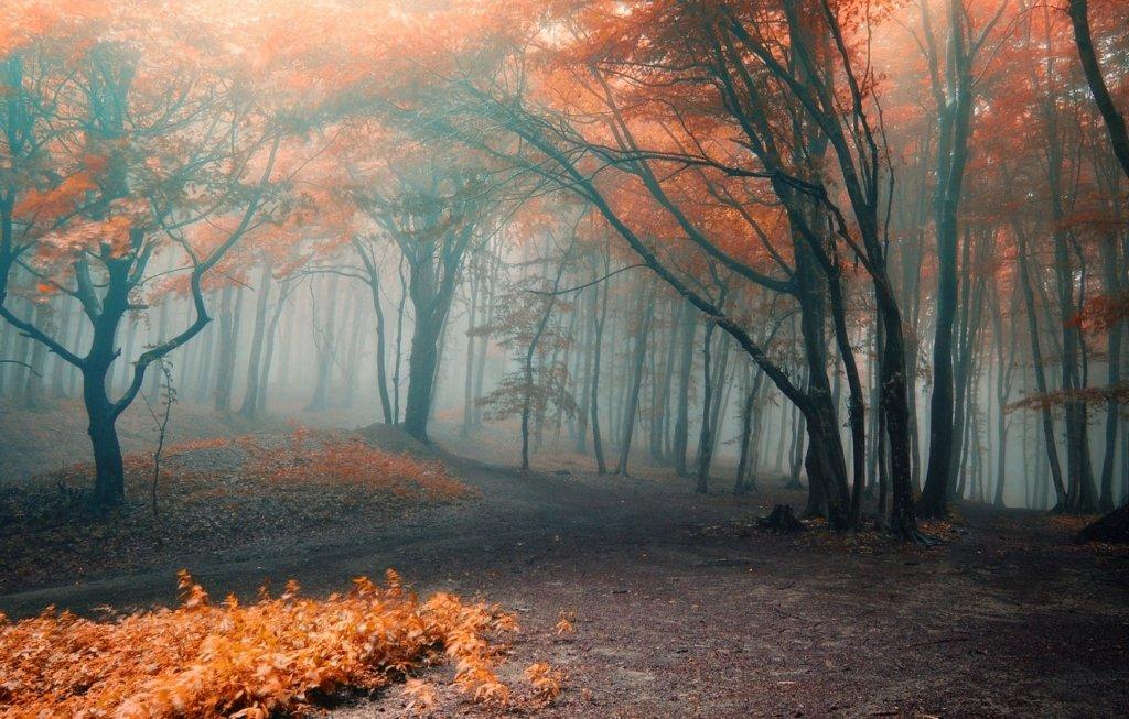 Огорнуть непроглядні тумани: якою буде погода до кінця тижня