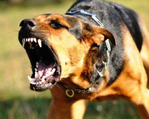 Женщина, которую в Полтаве покусали собаки умерла: подробности ЧП