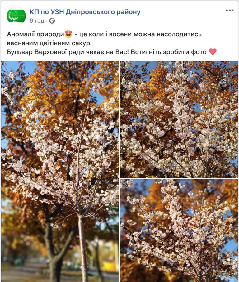 Доставка цветов, доставка цветов киев директор антонова