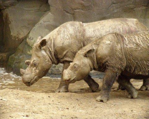 Більше немає: померла остання самка рідкісної тварини