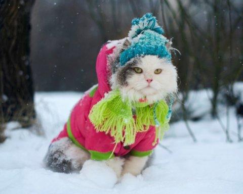 Україну в перший день зими засипало снігом
