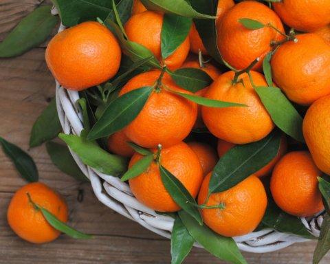 Сколько мандарин можно съедать без вреда для здоровья: медики объяснили