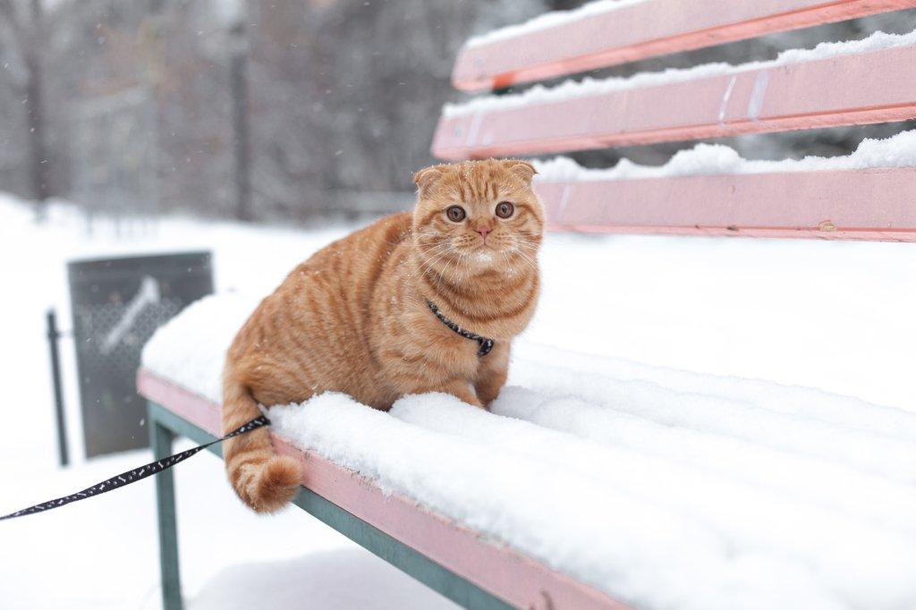 Зима будет теплой, но: синоптики дали интересный прогноз на зиму в Украине