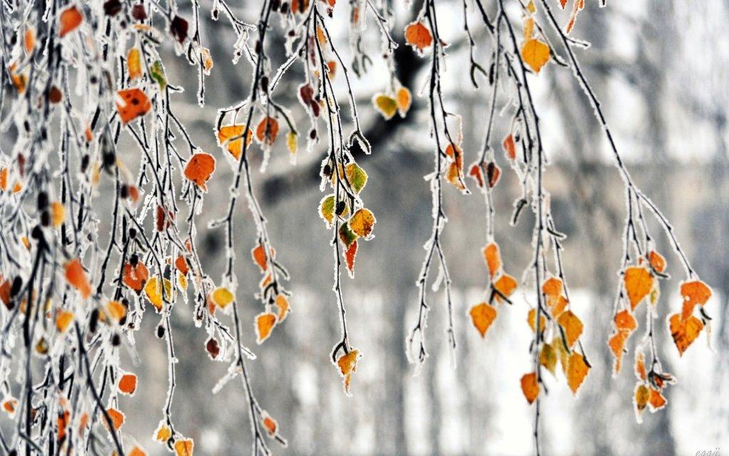 Огорне холодом: синоптики озвучили прогноз погоди на сьогодні