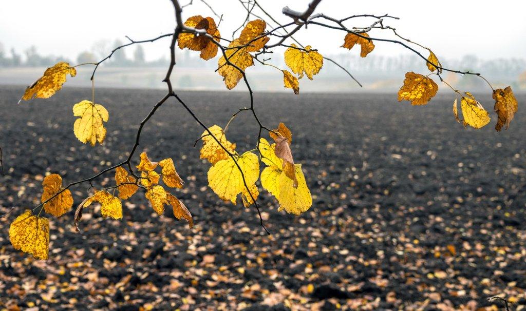 Погода на вихідні в Україні: без сильних опадів, але холодно
