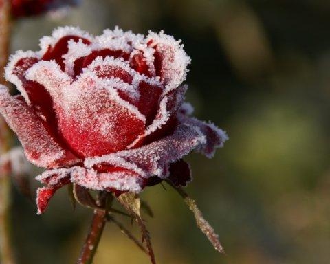 Наступают морозы: Диденко предупредила об изменении погоды в Украине