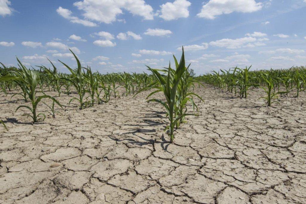 Зміни клімату: в найближчі 30 років Україні загрожує опустелювання