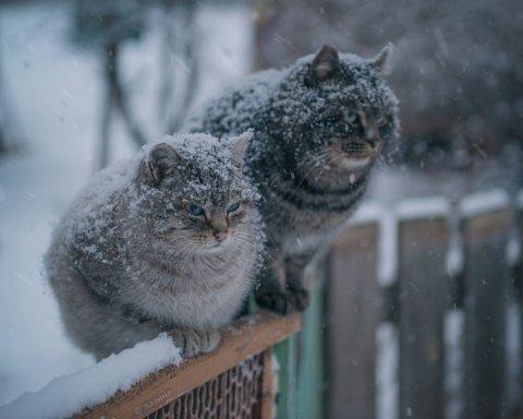Дожди и снег: синоптики предупредили об ухудшении погоды в Украине