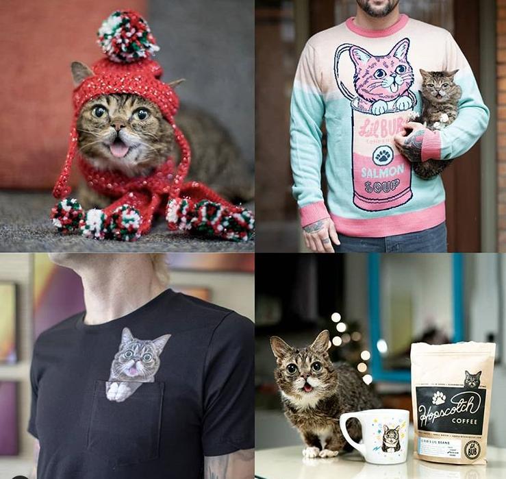 Померла зірка інтернету Ліл Баб: одна з найвідоміших кішок інтернету
