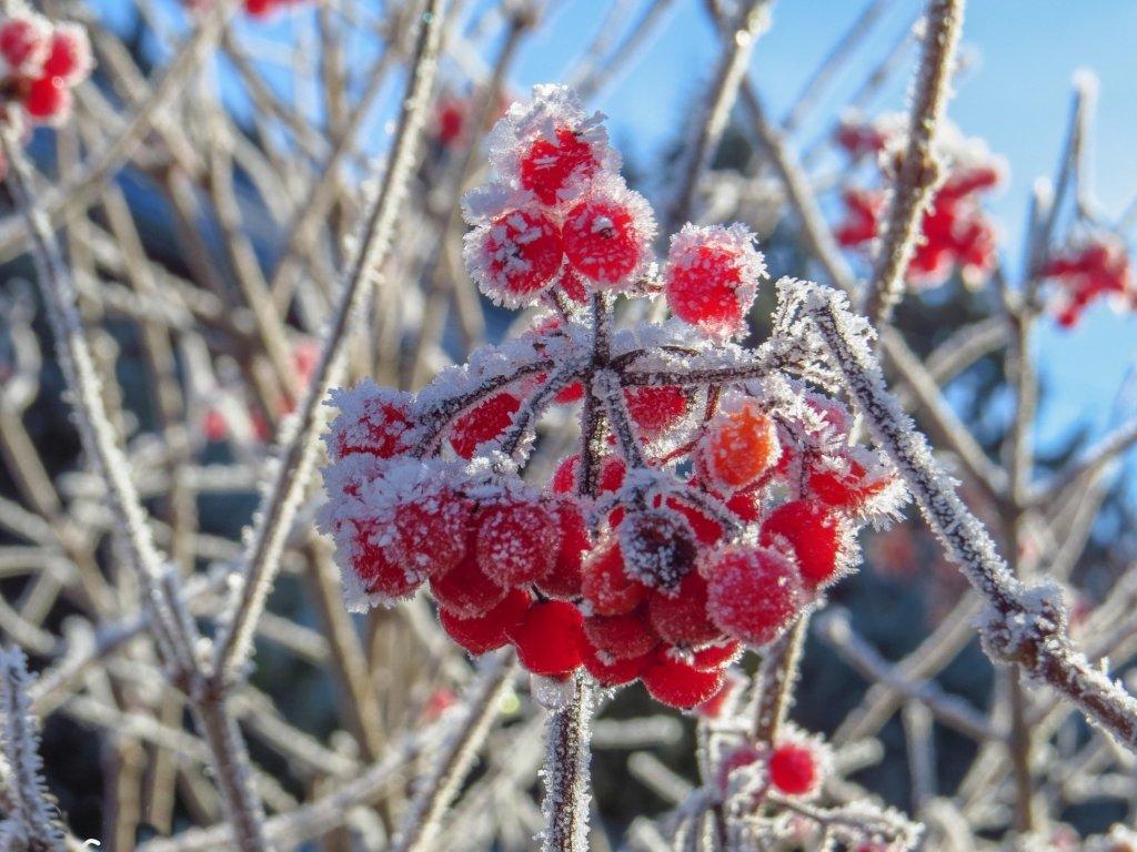 Какой будет погода в январе: синоптики дали прогноз