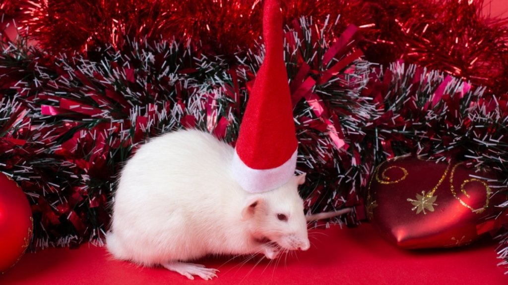 Новый год 2020: что принесет год белой металлической крысы