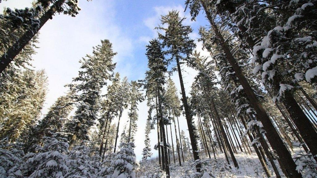 Циклон сменил направление: где сегодня пройдут снегопады