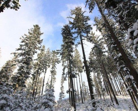 Карпати засипало рекордним шаром снігу: яскраве фото