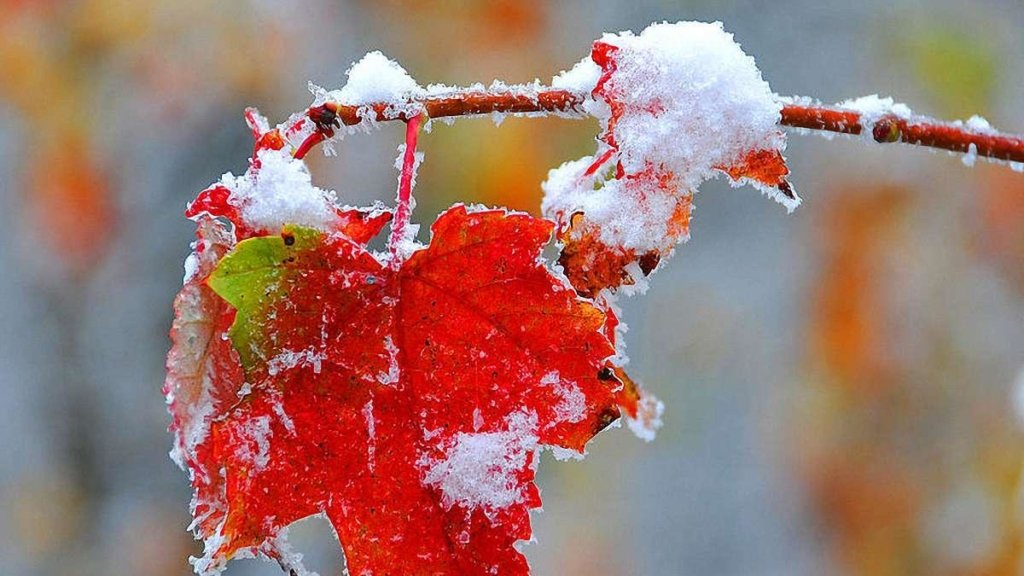 Буде аномально тепло: метеоролог дав прогноз до кінця зими