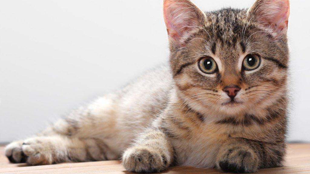 День кошек 2021: красивые поздравления и открытки