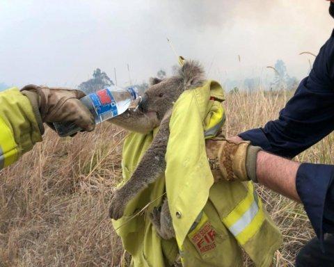 Пожежі в Австралії: у вогні загинуло півмільярда тварин
