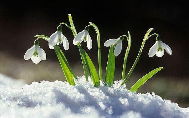 Прогноз погоды на февраль: будет аномальное тепло
