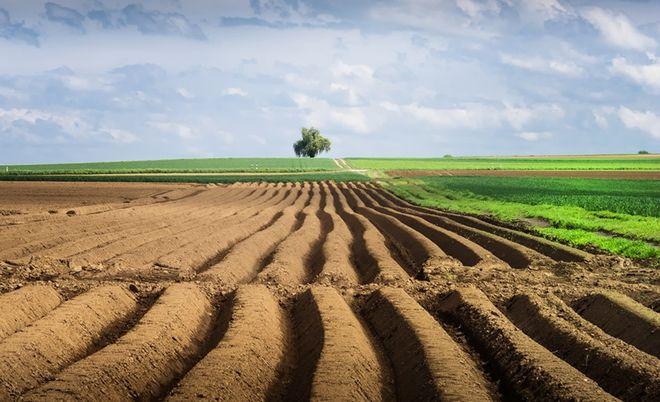"""У Кабміні озвучили """"долю"""" закону про ринок землі"""