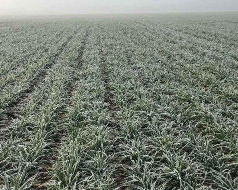 Аномально теплая зима: эколог предупредил о печальных последствиях отсутствия снега
