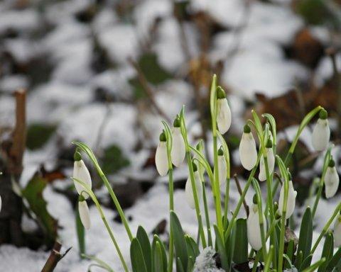 Встречаем весну: синоптики рассказали о погоде на воскресенье