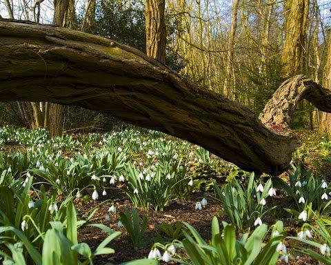 Прийшла весна: в мережі показали яскраві фото торжества природи