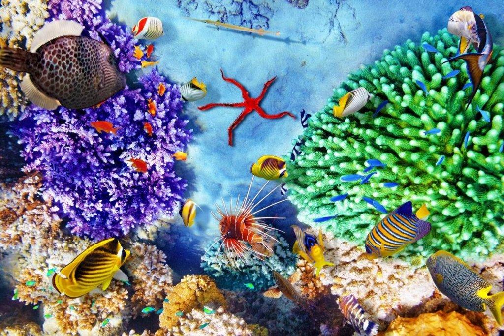 Вчені прогнозують загибель майже всіх коралових рифів у найближчі роки