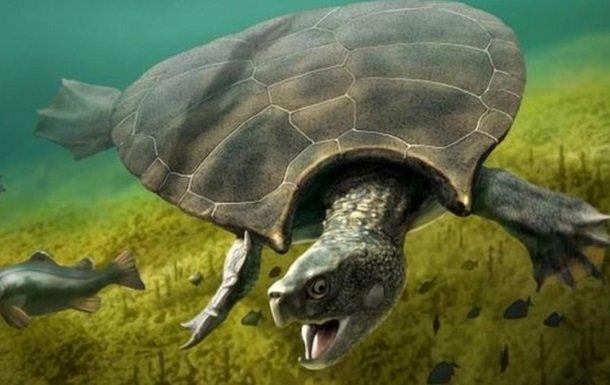 Ученые нашли останки самой большой в мире черепахи