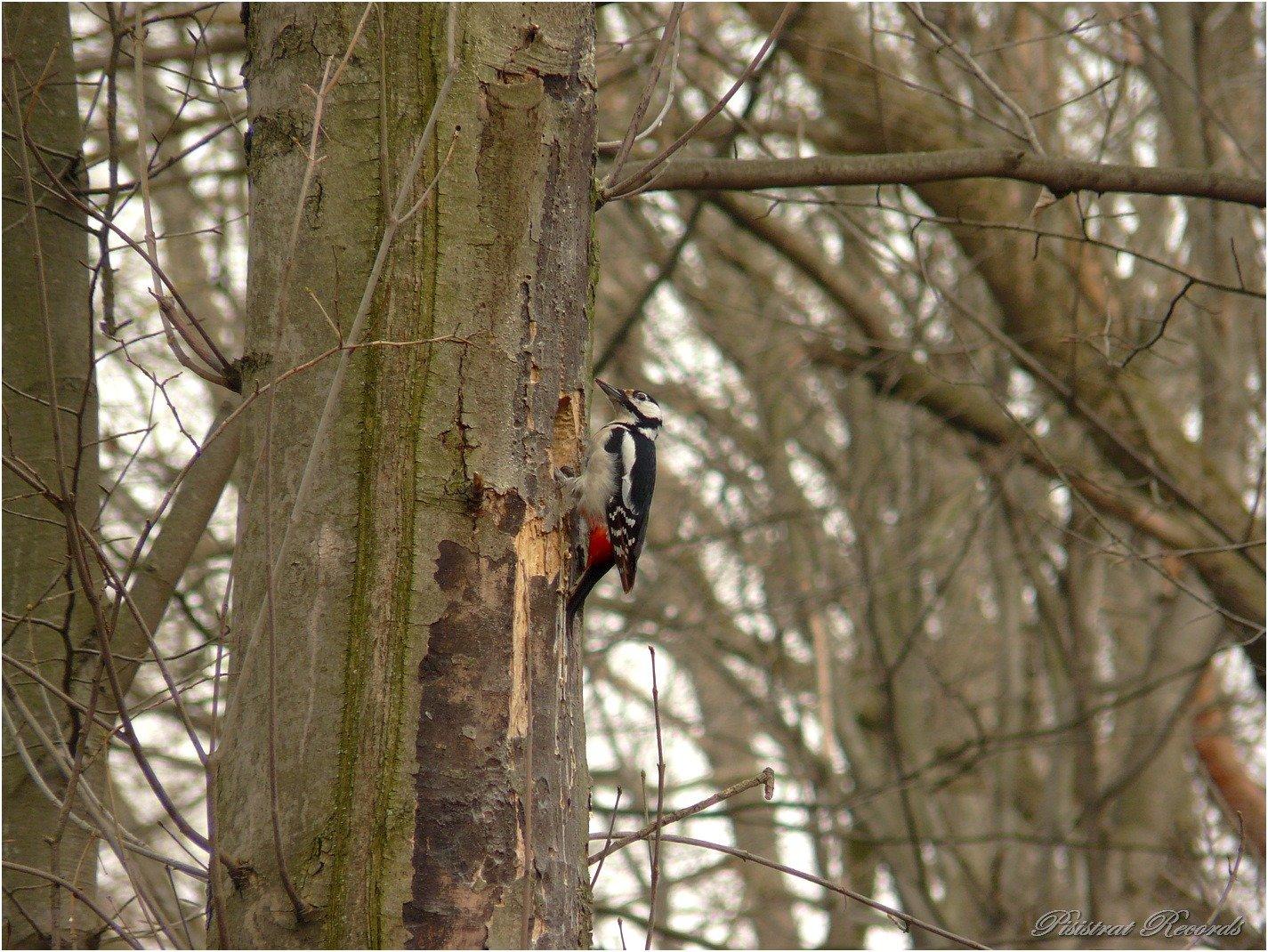 Пришла весна: в сети показали яркие фото торжества природы