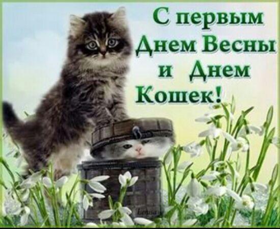 День кішок 2021: красиві привітання та листівки