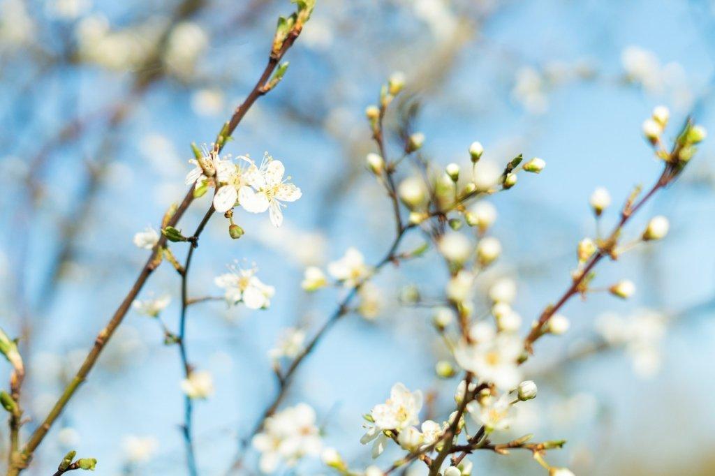 15 апреля — какой сегодня праздник: что нужно делать в этот день