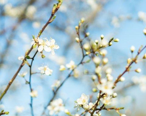 Багато тепла та мало дощів: синоптики уточнили прогноз погоди на перший місяць весни