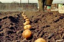 Огород и дача: посевной календарь на апрель-2020