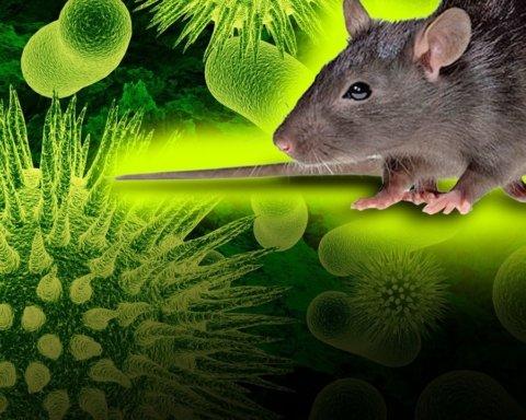 Хантавирус в Китае: ученые объяснили, почему не нужно паниковать