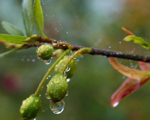 Дожди и засуха: синоптик дала прогноз погоды до конца весны в Украине