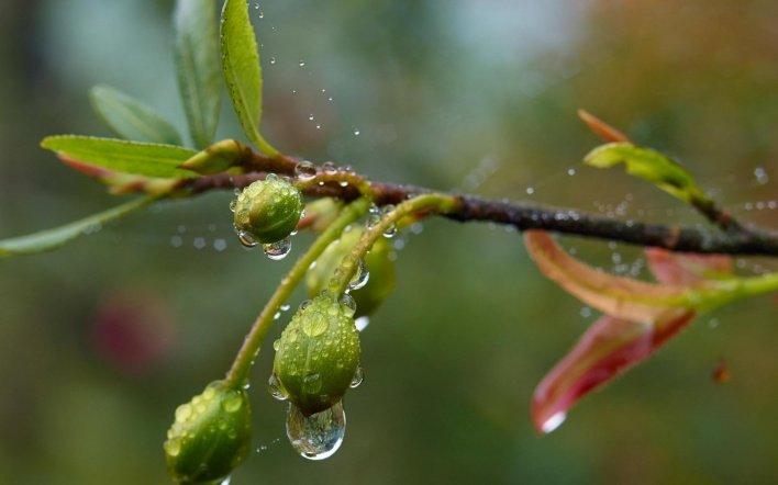 Дощі та посуха: синоптик дала прогноз погоди до кінця весни в Україні