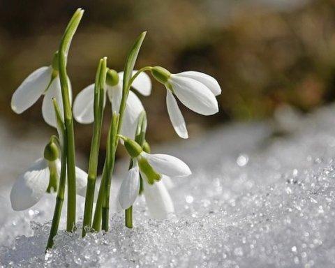 Ворвется аномальное тепло с заморозками: синоптики дали неоднозначный прогноз погоды на март